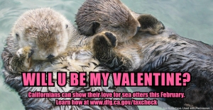 "two sea otters floating on their backs, touching forepaws, with caption ""Will U Be My Valentine?"""