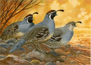A painting by Tim Turenne was named the winner of the 2014-15 California Upland Game Art Contest