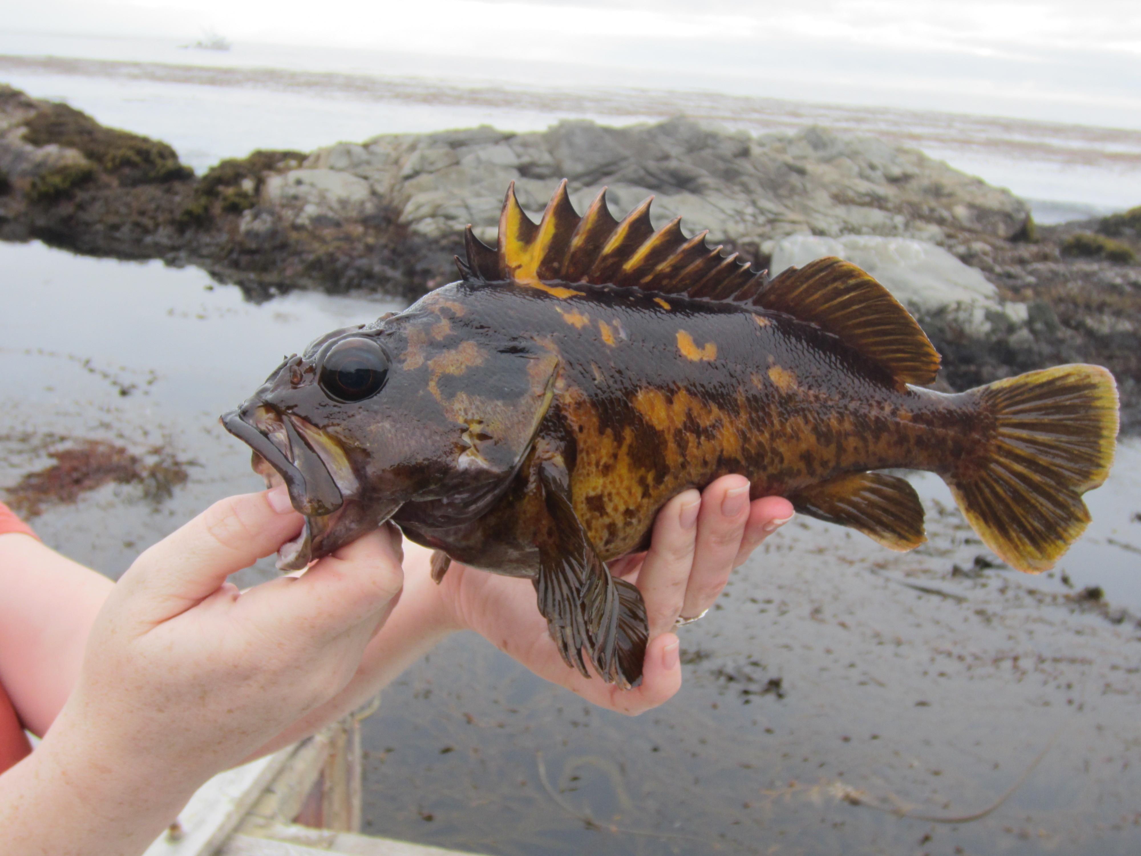 New recreational groundfish regulations now in effect for California fishing regulations