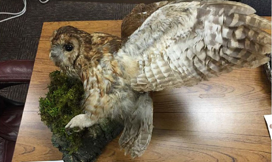 State Federal And French Wildlife Officers Work Together To Stop Illegal Import Cdfw News