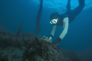 abalone diver
