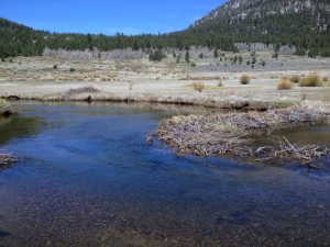 small river with pebble bottom running through a dry Alpine wilderness