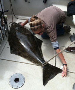 A technician with the California Recreational Fisheries Survey measures a Pacific halibut.