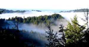 view of conifer forest and hills from above the fog