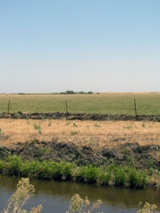 Flat, green and gold pasture in Solano County, California