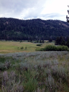 green and gray, grassy rangeland and tree-covered foothills