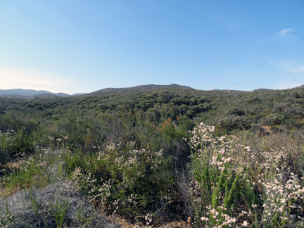 Southern California hills covered with green sagebrush, chaparral and wildflowers.