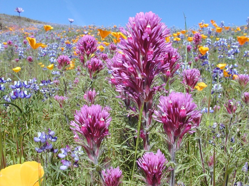 field of orange, blue, and pink-purple flowers and grass