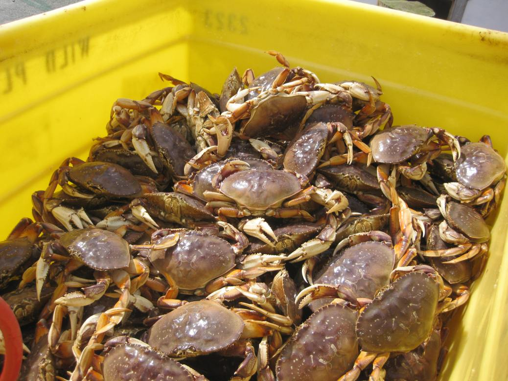 Crabs-commercial catch in bin1
