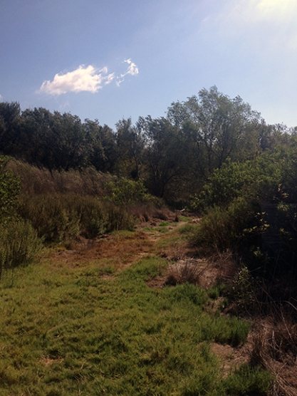 scrub brush and grass grow in a low riverbed corridor