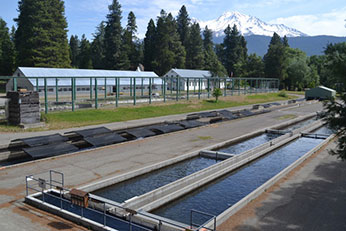 Mt-shasta-Hatchery-346