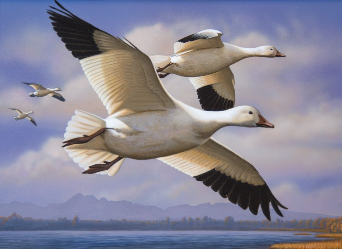 Duck Stamp 2016 Second Place (2)