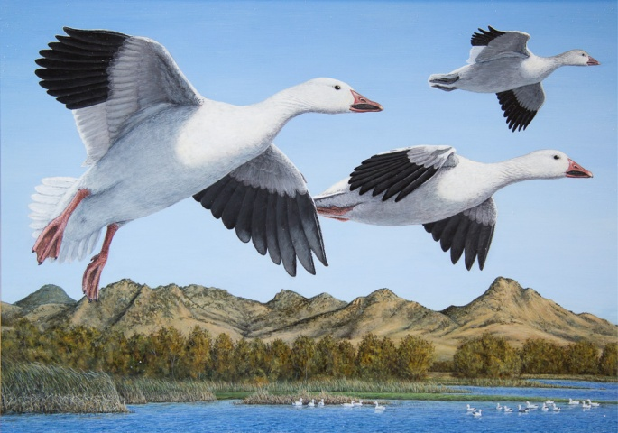 Duck Stamp 2016 Third Place (2)