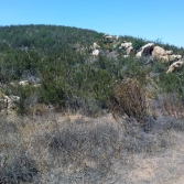 Hollenbeck Canyon Wildlife Area near Jamul in San Diego County. CDFW photo