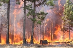 raging forest fire consuming trees