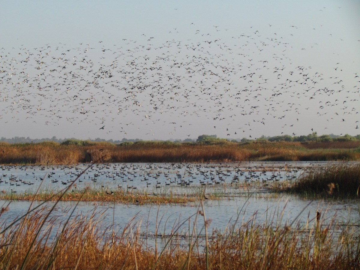 Waterfowl hunting regulations set for 2018 19 season for California fish and game regulations