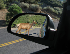 Seen in the side mirror of a vehicle, a doe crosses the road.