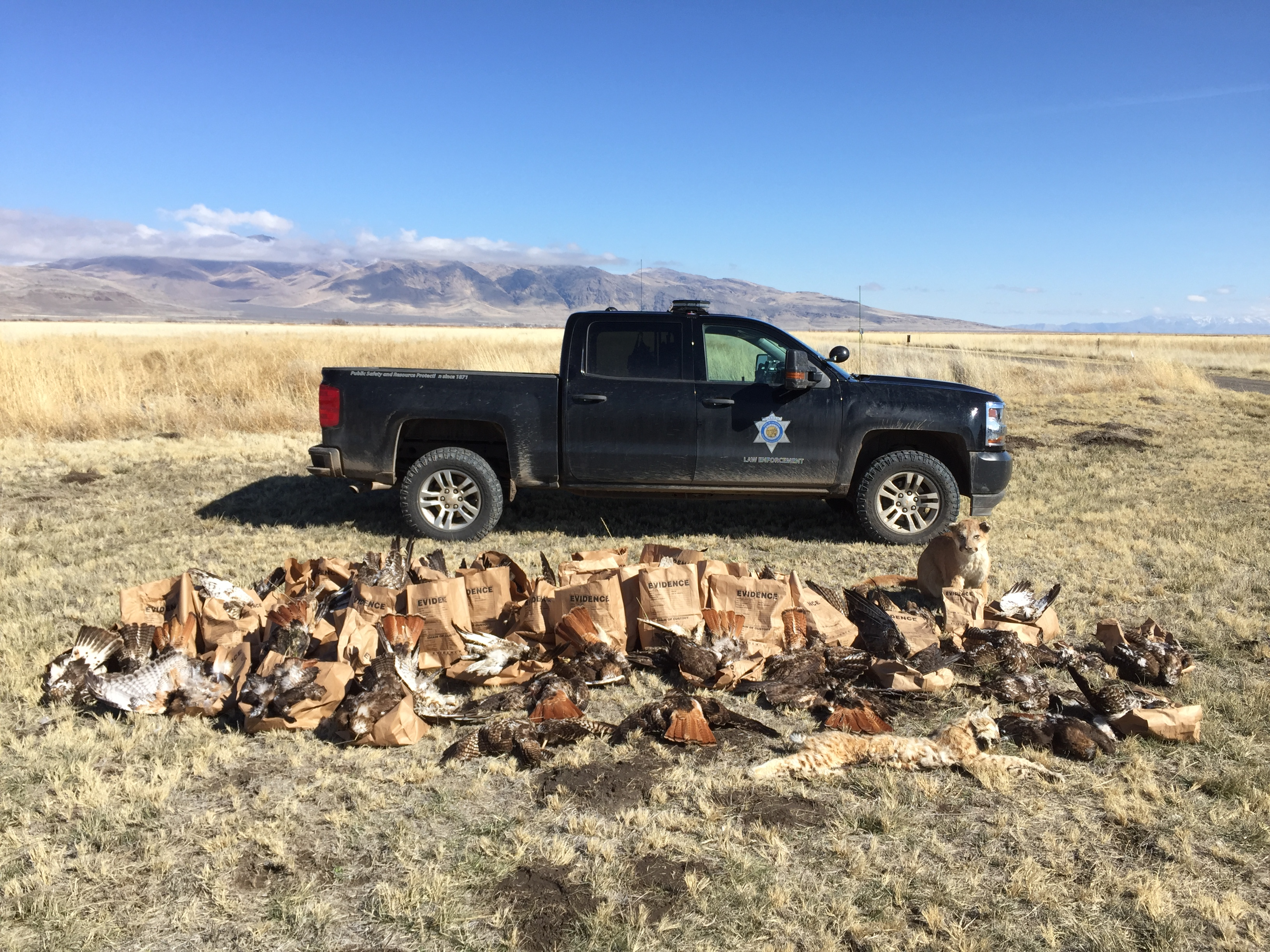 Fish And Wildlife: Lassen County Raptor Poaching Case 'Largest' In State History