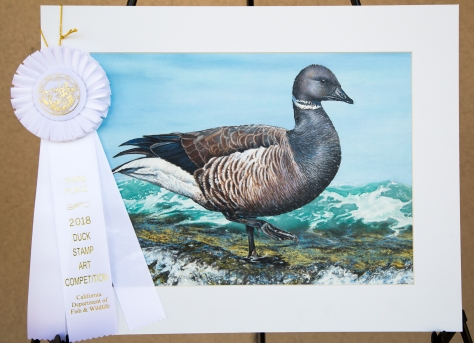 2018-19 duck stamp contest third place with ribbone