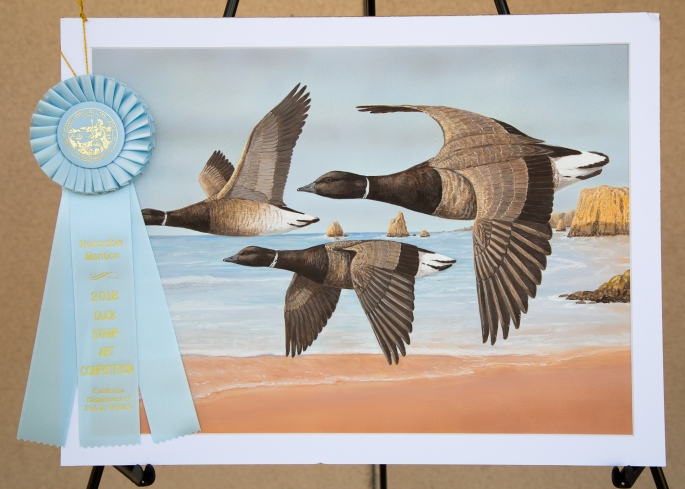 2018 Duck Stamp honorable mention with ribbon