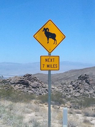 "A yellow, diamond-shaped sign with a black bighorn sheep silhouette, and a small rectangular sign that says ""Next 7 miles"" in the southern California desert."