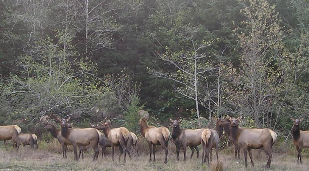 Smith River elk herd