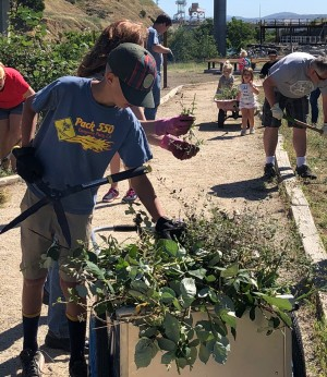 volunteers remove invasive plants at a public park