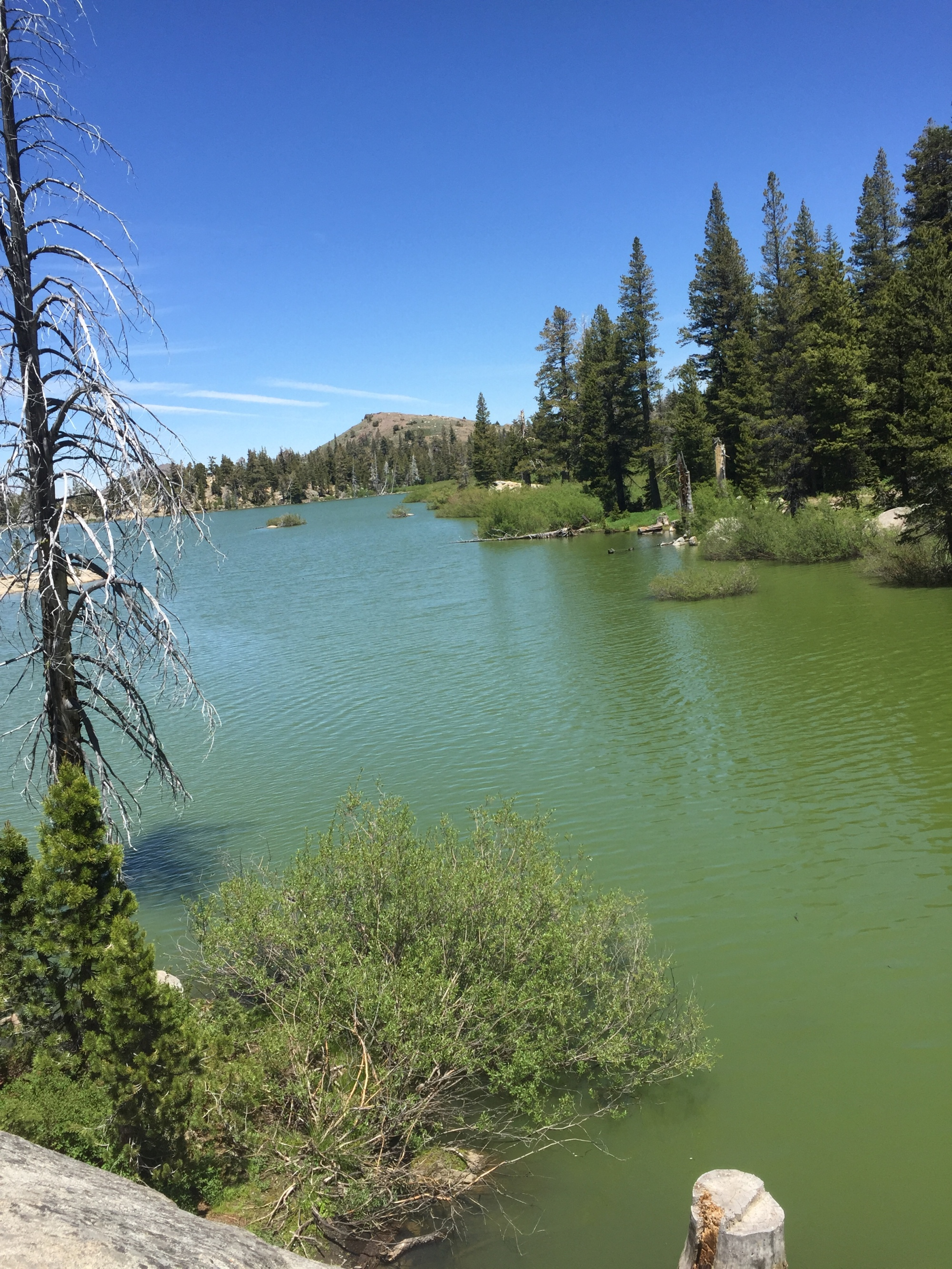 Green water, reduced visibility and surface scum are among the signs that a harmful algal bloom -- or HAB -- could be present in a freshwater environment.
