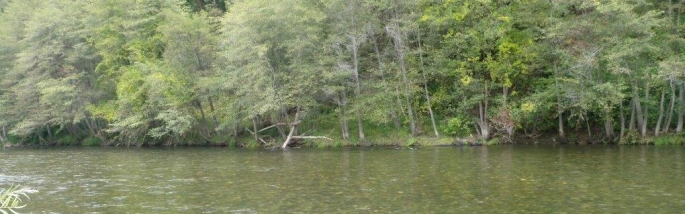 view of broad shallow river and trees on the opposite bank